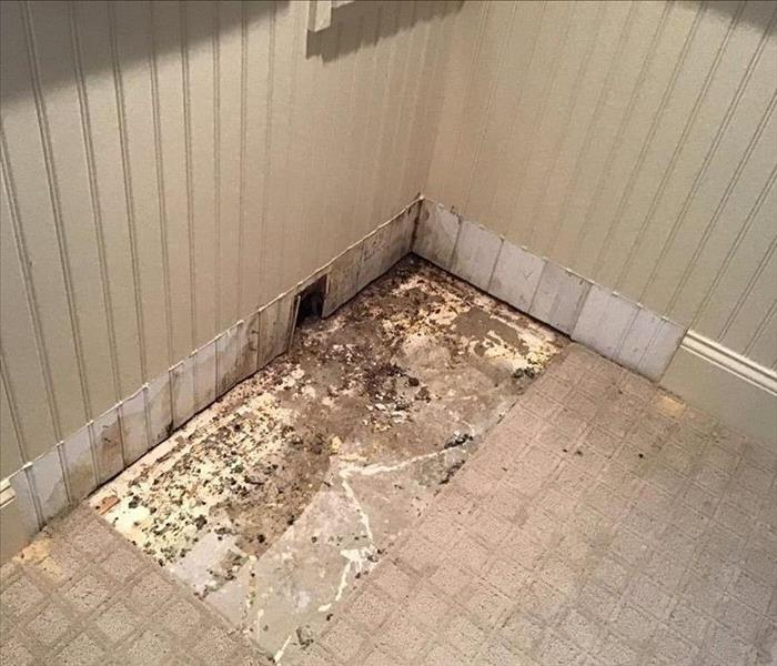 Mold on the floor of a room in the corner with white walls and white tile floor.